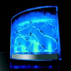 Antquarium - akwarium dla mrówek z podświetleniem LED