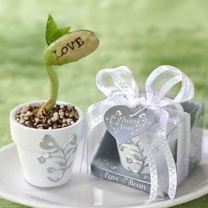 Vypěstuj si sám - Magické zamilované fazolky